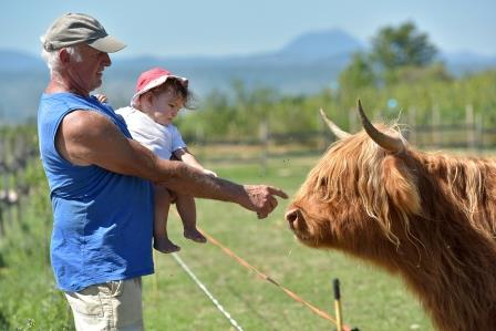 Sortie à la ferme pédagogique de la moulerette, à Montpeyroux, grand-père et son petit-fils devant une vache highland