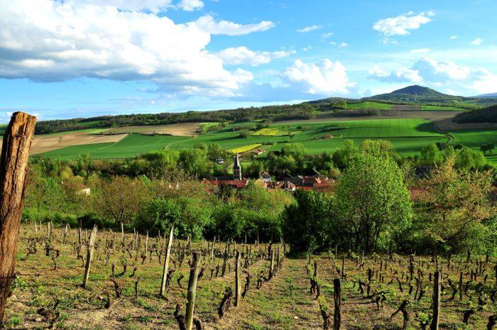 Vignes Perrier ©N.Dutranoy, Pays d'Art et d'Histoire