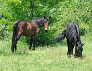 balade à cheval dans le Pays d'Issoire