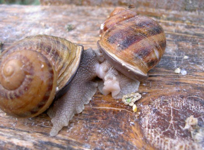 exploitation d'escargots à Jumeaux en Auvergne