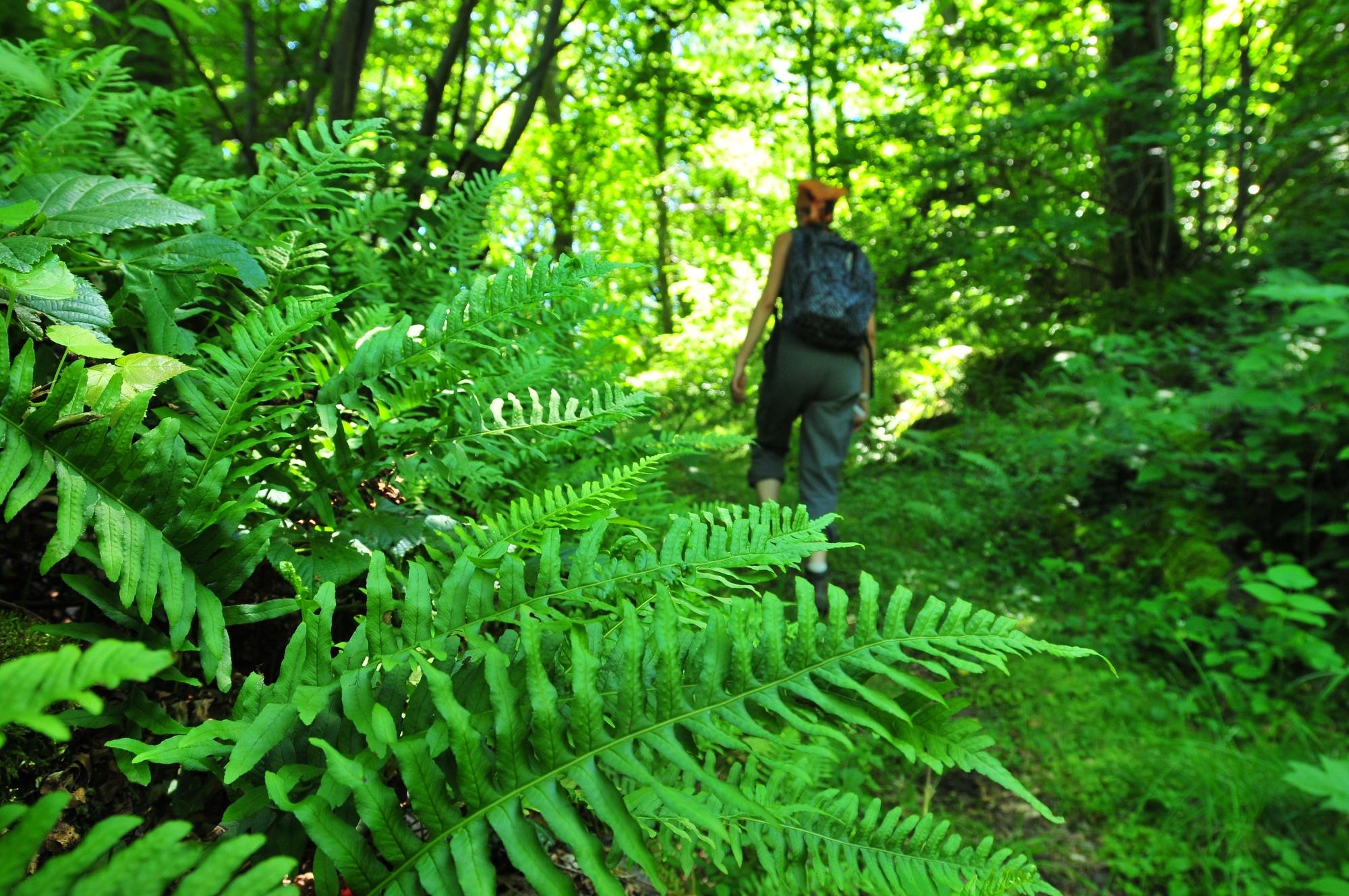Forêt de la comté, Saint-Babel