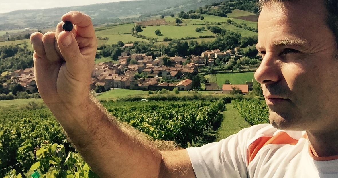 David pélissier vigneron