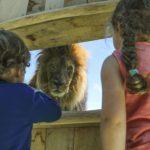 au parc animalier d'Auvergne