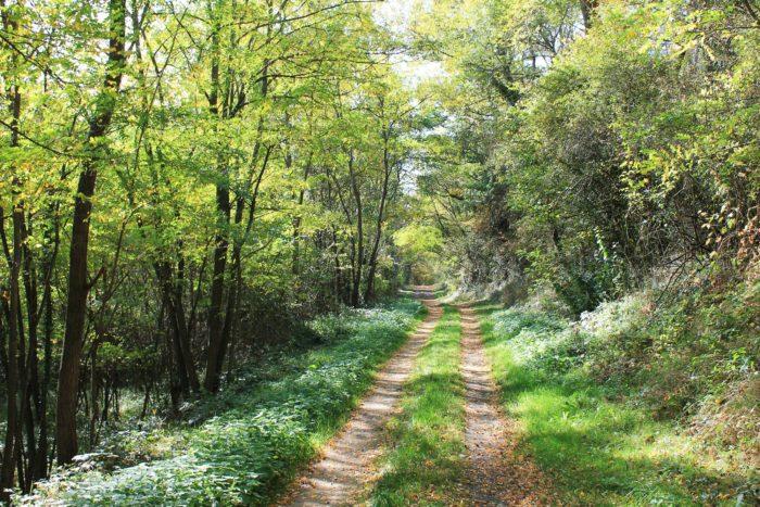 Chemin forestier menant à l'abbaye du Bouschet